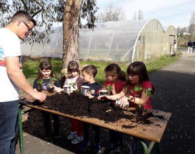 Planter des fraisiers en CP -CE1